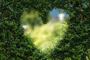 heart-topiary