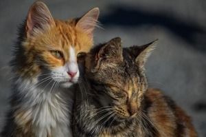 sad_cats